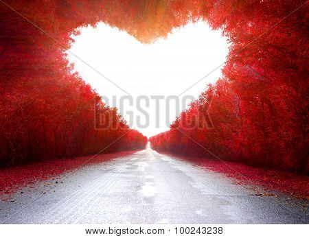Road to love .Trees in the shape of a heart