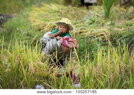 Unidentified H'mong ethnic minority women work in terraced rice field in Laocai