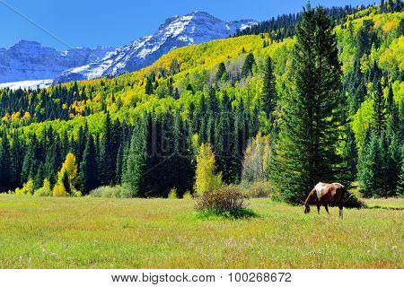 Grazing Horse In The Alpine Scenery During Foliage Season