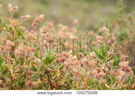 Summer Grass Meadow Close-Up
