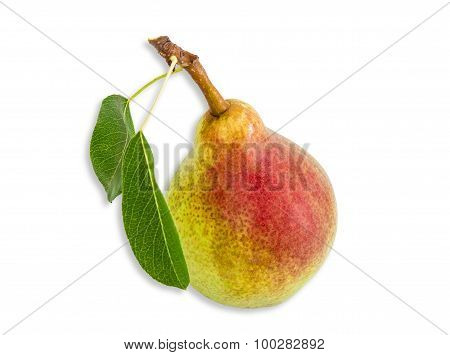 Pear Bartlett On A Light Background