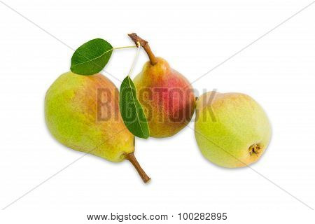 Three Pear Bartlett On A Light Background