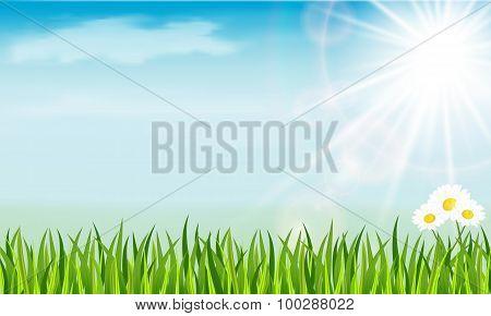 Chamomile, Sun And Grass