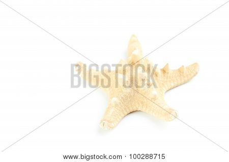 Starfish Isolated On A White