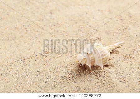 Sea Shell On A Beach Sand
