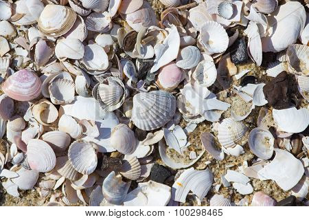Natural Shells And Sand Background