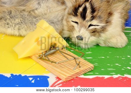 Cat And Mouse Trap