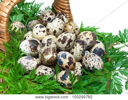 Quail Eggs In A Basket Close-up