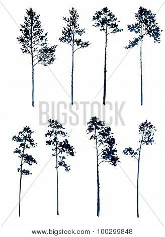 set of pine trees