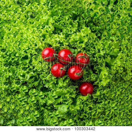 lettuce salad and cherry tomatoes on a wood background