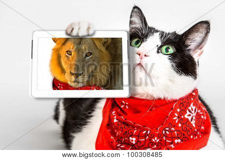 Lions Heart Cat