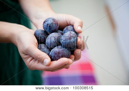 Woman Holding German Plums In Her Hand