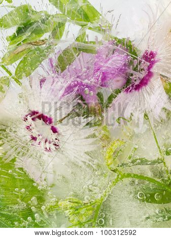 Frozen Delicate Flowers And Leaves