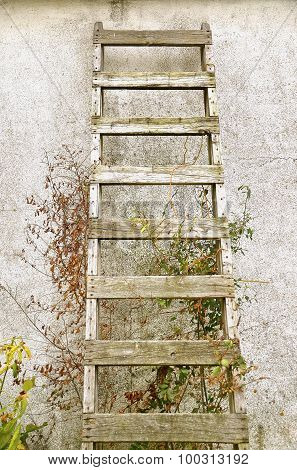 Old wood ladder on stucco wall