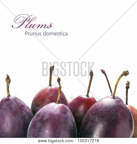 Standing Plums Isolated On A White Background, Sample Text