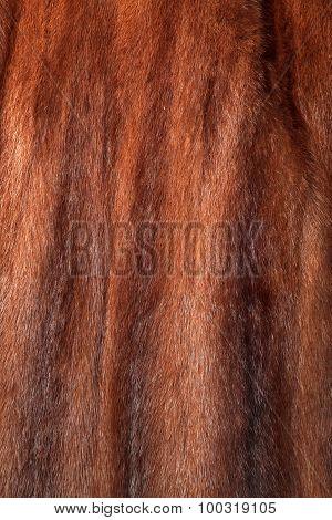 Brown Mink Fur Texture Or Background