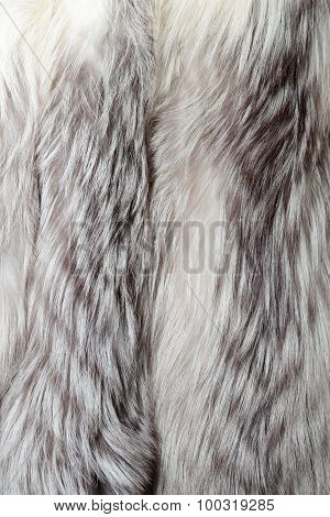 White Fox Fur Texture Or Background