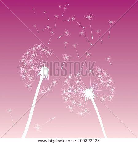 White Vector Dandelions Pink Sky