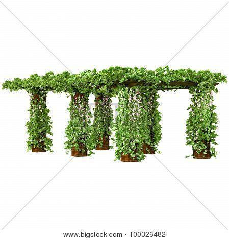 Pergola on the brick pillars