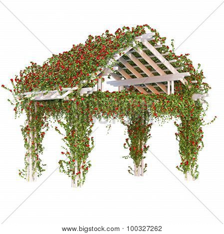Curly red roses on the pergola