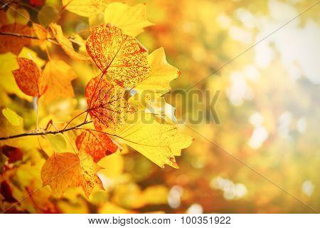 Beautiful autumn tree with sunlight