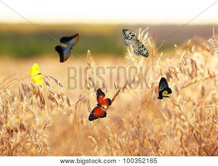Beautiful butterflies flying on meadow