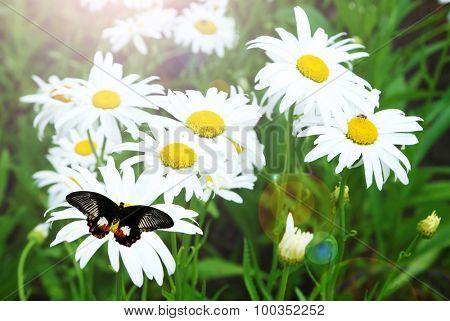 Beautiful butterfly flying on meadow