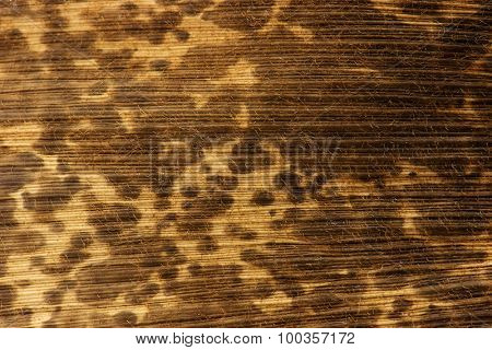 Dried bamboo skin or husk, high magnification macro. Close up of bamboo skin.