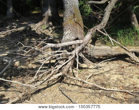 Branches and roots