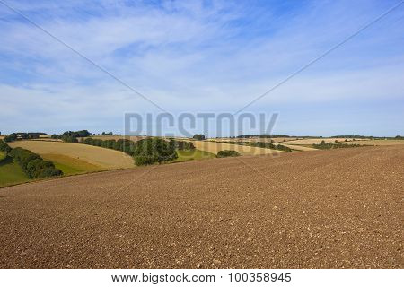 Agricultural Scenery In Late Summer