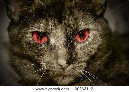 Red Eyed Cat