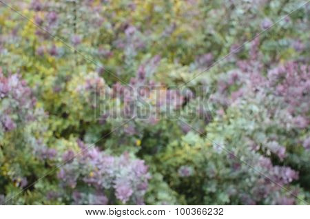 Tender Abstract Blurred Natural Background In Yellow-green And Pastel Purple Colors