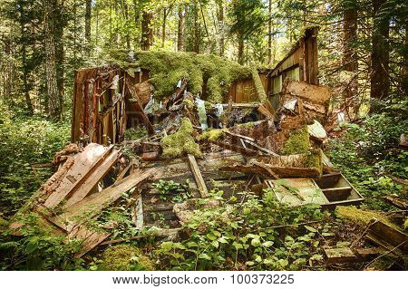 Rotting Old Shed In Forest