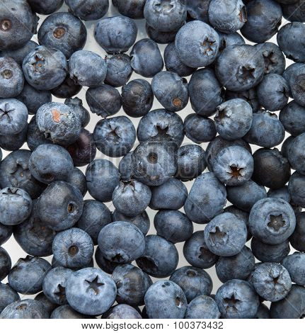 Freshly picked blueberries background pattern