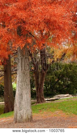 Orange Autumn Foliage