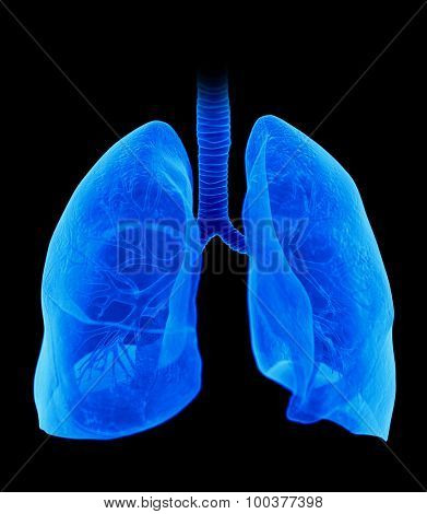 medically accurate illustration of the lung