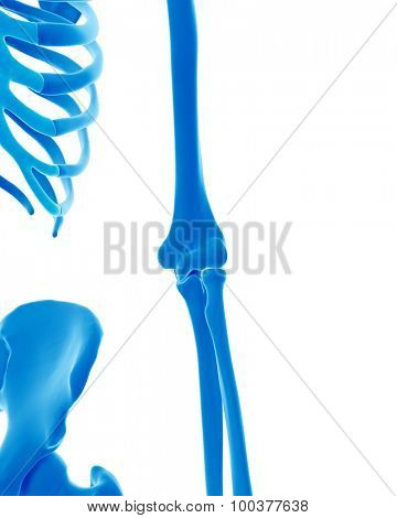 medically accurate illustration of the skeletal elbow