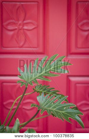 Close up of a green Philodendron plant in front of a red front door with flower carvings at the entrance to an upscale home.