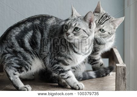 Two Cats Sitting On Old Wood Shelf
