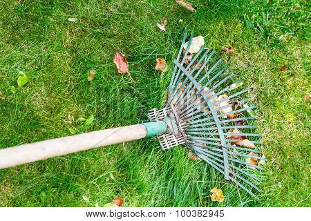 Raking Leaves From Lawn By Rake