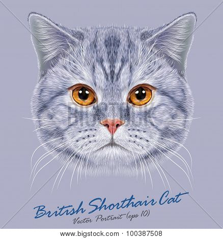 Vector Portrait of British Short-hair Cat
