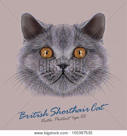 Vector Portrait of British Shorhair Cat
