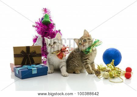 Cute tabby kitten with present onwhite background isolated