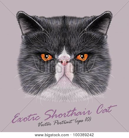 Vector Portrait of Exotic Shorthair Cat
