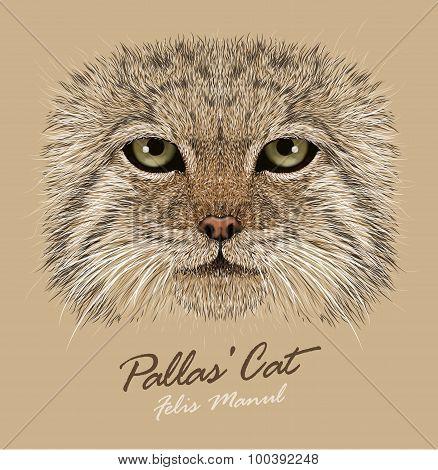 Vector Portrait of a Manul Cat