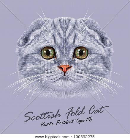 Vector Portrait of Scottish Fold Cat