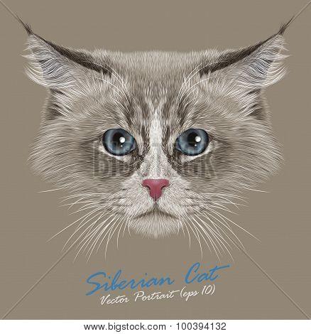 Vector Portrait of Siberian Cat