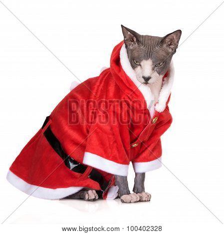 canadian sphynx cat in a santa costume