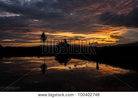 Beautiful Cornfield sunrise\ sunset reflected in water