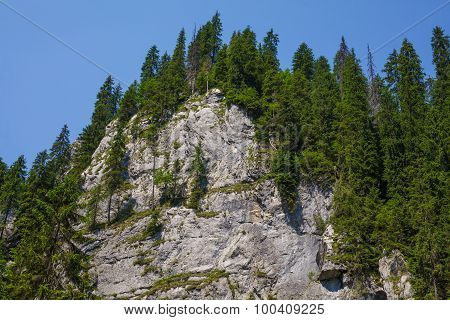 Mountain Peak Covered By Fir Forest